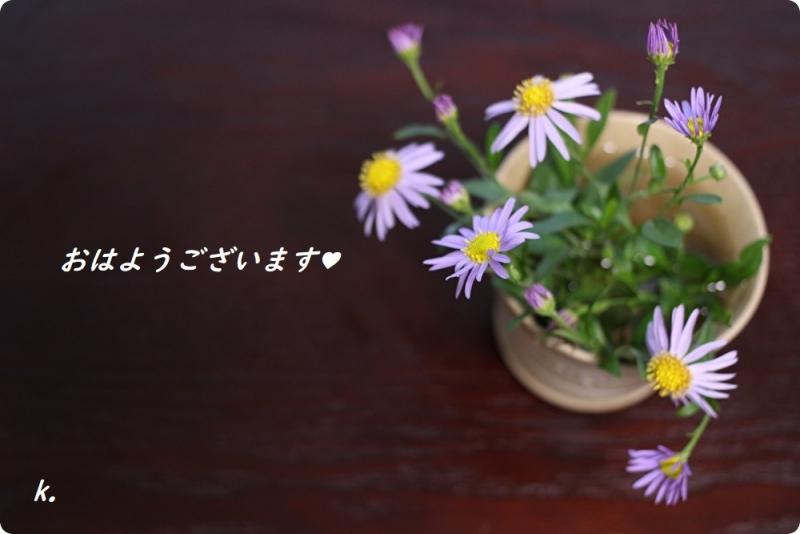 グリーティングノコンギク生け花