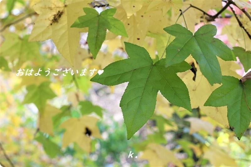 グリーティング 黄色と緑の葉っぱ