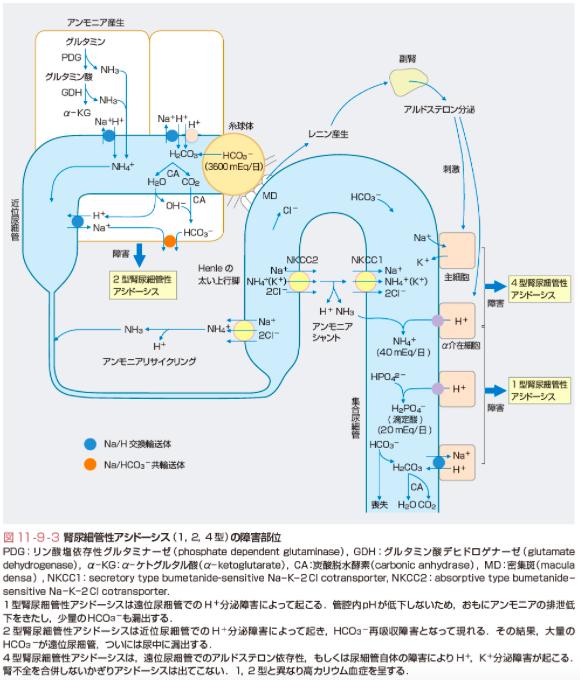 尿細管性アシドーシス003