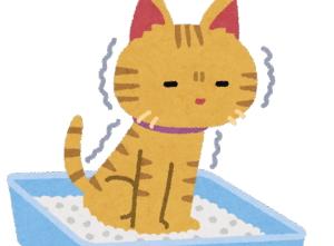 [韓国の反応]かりんとうをう◯ちと勘違いして、食べてる主を心配してくる猫のあまりの可愛さに韓国人も感動!「韓国ネット民]