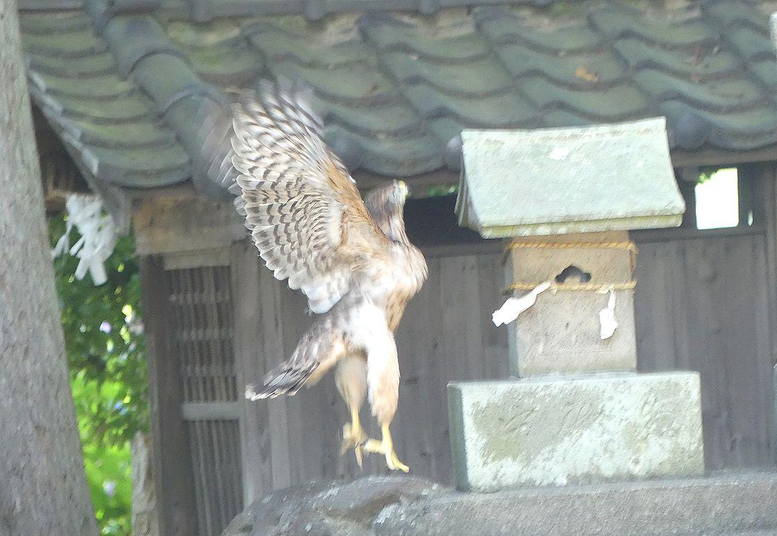 ootakawaka24.jpg