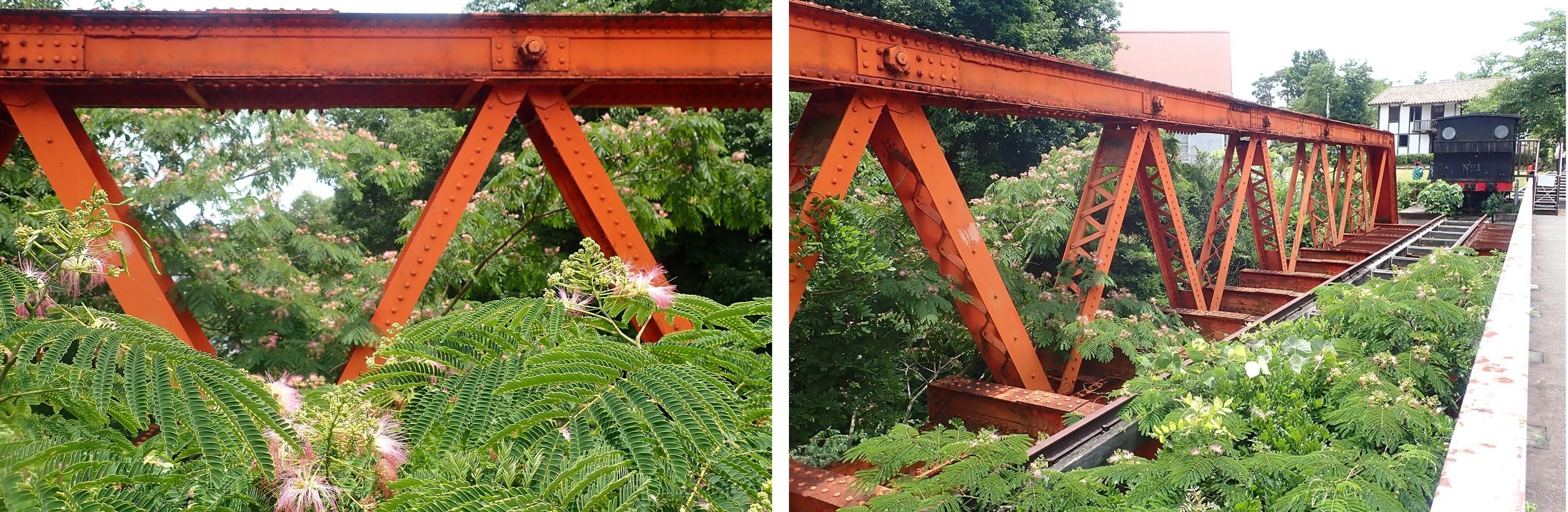 六郷川鉄橋とネムノキ