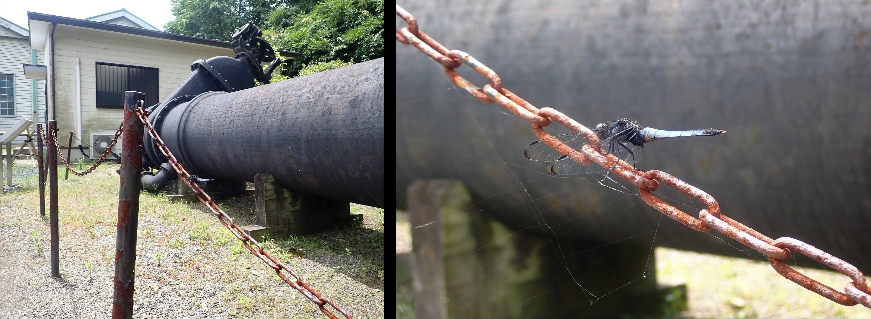 導水管とトンボ