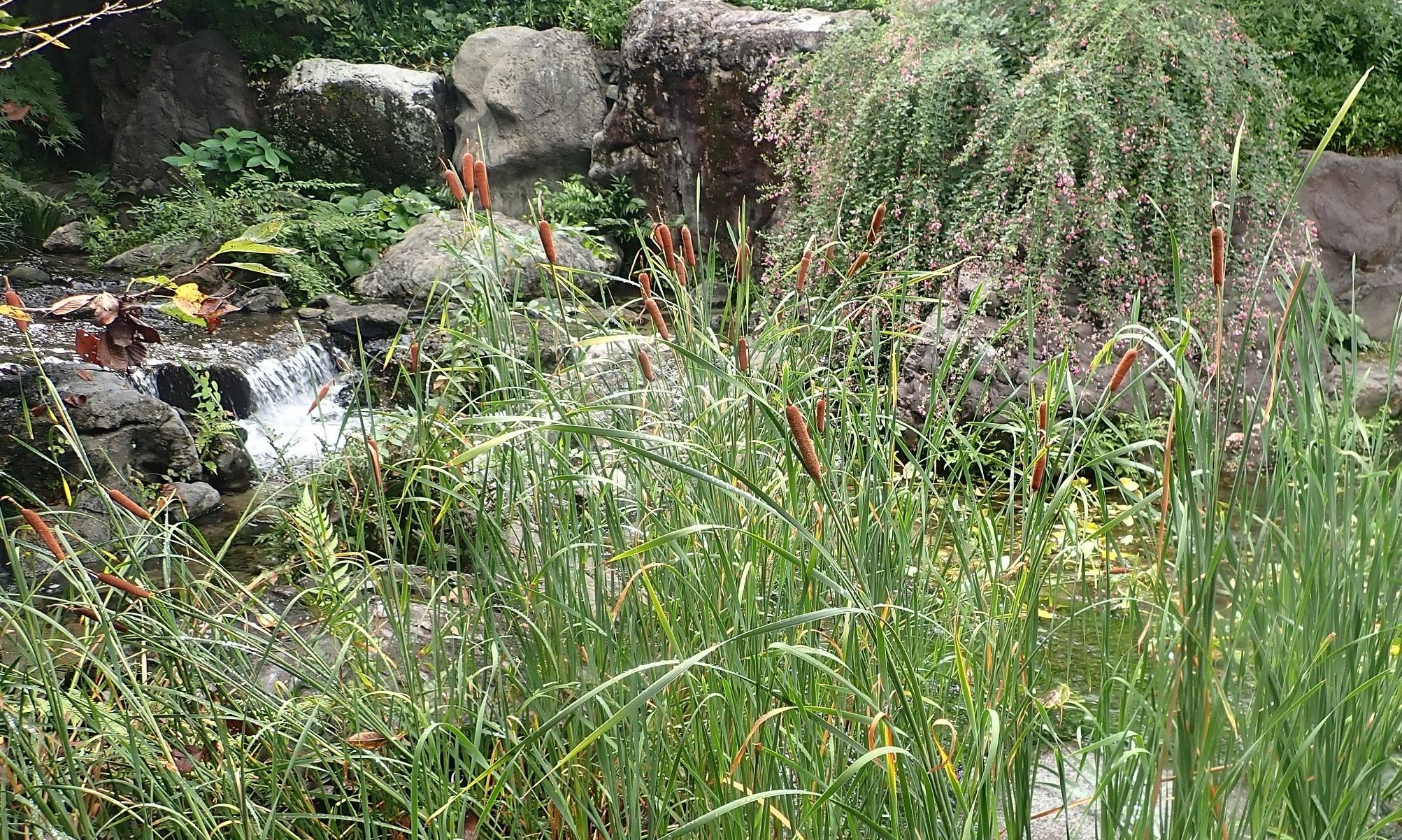 白鳥庭園2020秋3