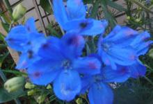 200507-02.jpg