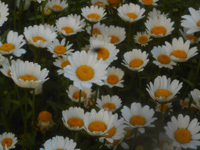 200508-04.jpg