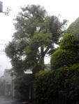 200516-08.jpg