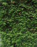 200531-04.jpg