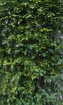 200604-09.jpg