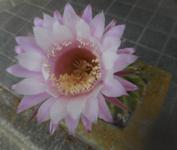 200608-04.jpg