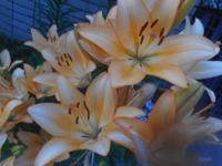 200609-03.jpg
