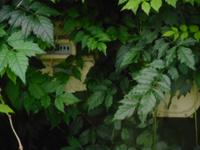 200703-06.jpg
