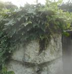 200705-03.jpg
