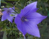 200731-03.jpg