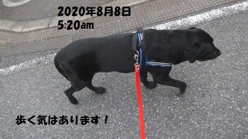 202008081.jpg