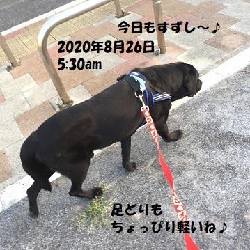 202008261.jpg