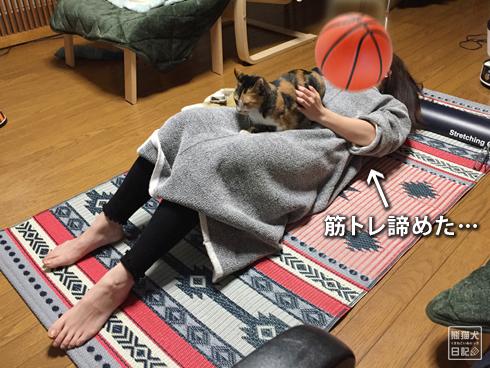 20200320_筋トレ妨害猫10