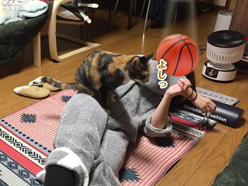 20200320_筋トレ妨害猫7
