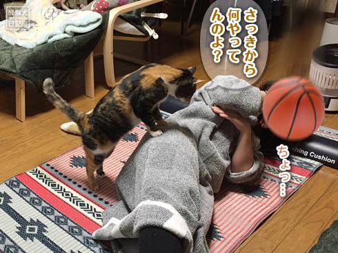 20200320_筋トレ妨害猫5