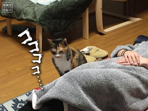 20200320_筋トレ妨害猫2