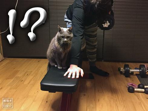 20200329_筋トレ妨害猫3
