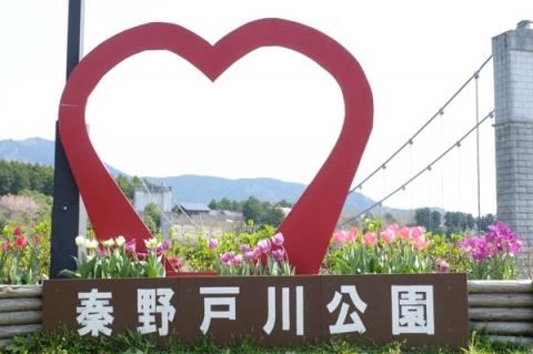 戸川公園風の吊り橋前のチューリップ