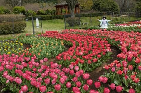 秦野スナップ戸川公園チューリップ畑に喜ぶ女の子