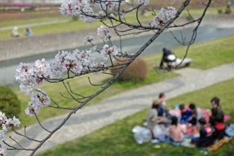 水無川で花見を楽しむ人たち