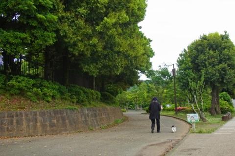 上府中公園を散歩する犬