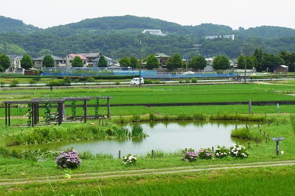 大井町スナップひょうたん池