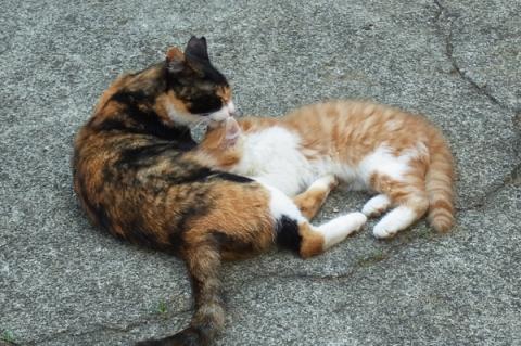 街猫の母子