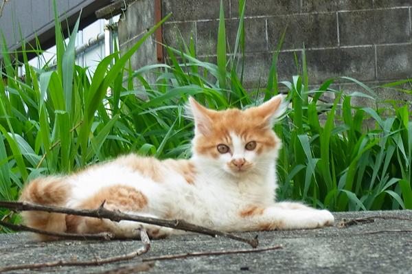 街猫の子供