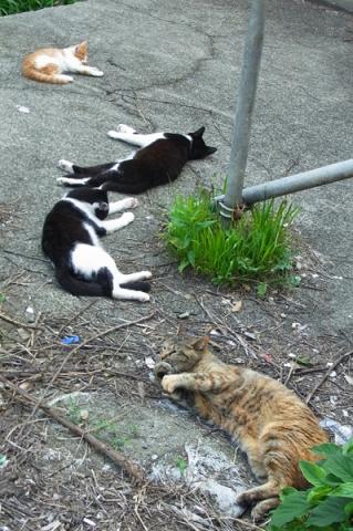 暑さにぐったりの街猫たち
