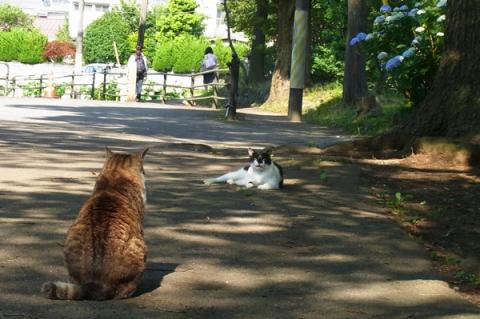 小田原の公園猫