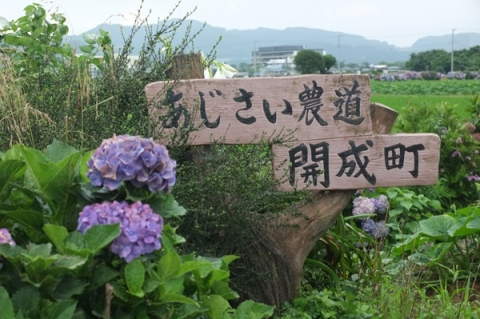 開成町あじさい農道の表示