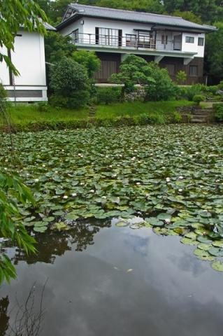 松永記念館の池の睡蓮