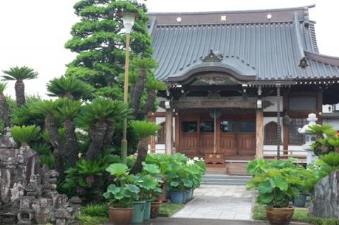 小田原市千代の蓮華寺