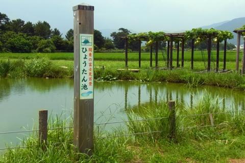 大井町のひょうたん池