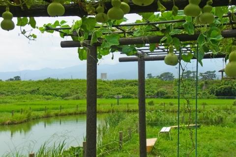 大井町ひょうたん池のひょうたん棚