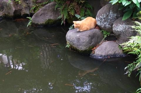 松原神社の猫