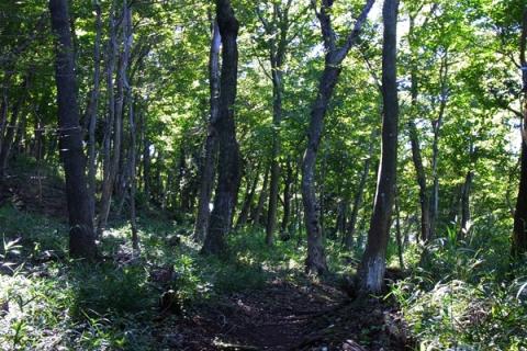 いせはら塔の山緑地公園の雑木林