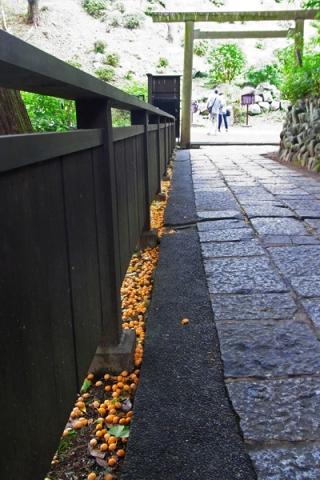 二宮神社に落ちていた銀杏