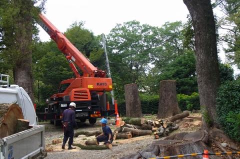 小田原城址公園で進む古木伐採