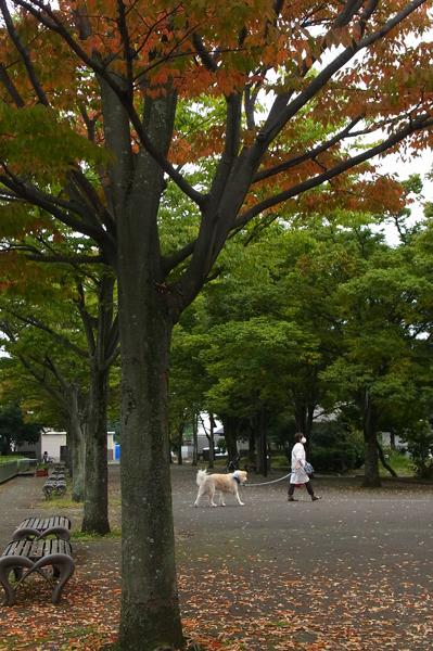 紅葉が始まった上府中公園
