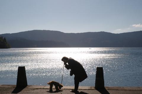 芦ノ湖畔を散歩中の犬