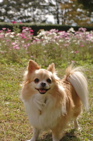 戸川公園散歩中の犬
