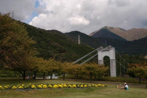 戸川公園のざる菊と風の吊り橋