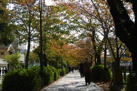 10月下旬のお堀端通り桜並木