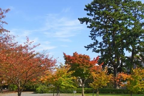 銅門広場の紅葉
