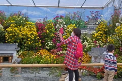 小田原城を模した小菊の寄せ植え